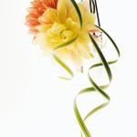 黄色&オレンジ花